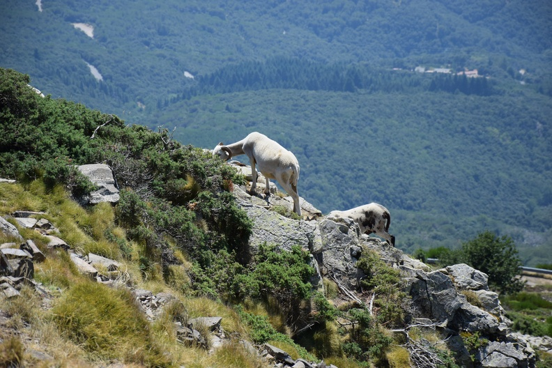 Balade dans le parc de Montseny