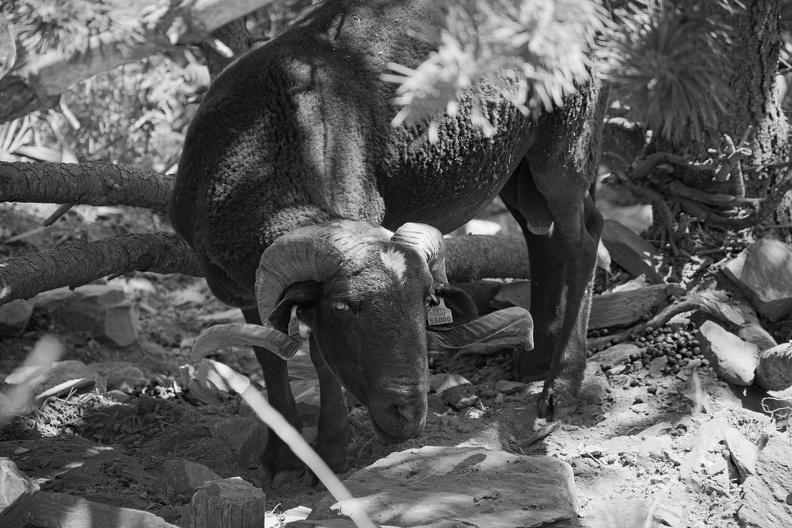 Balade dans le parc de Montseny (N/B)