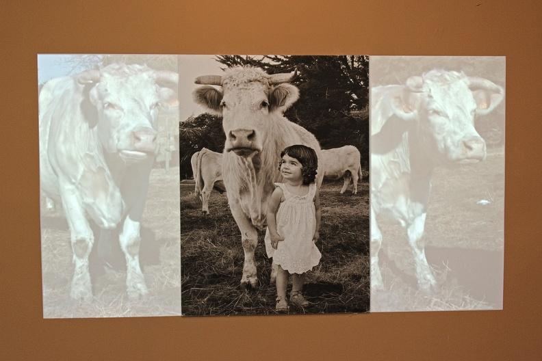 Alice et les vaches blanches (Agnès Varda)